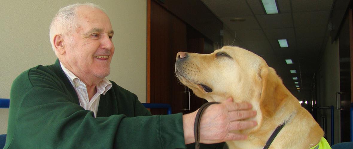 terapia con perros en Pontevedra