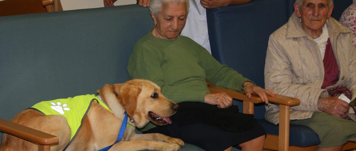 terapia con perros